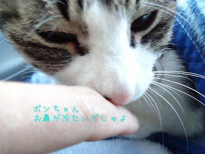 IMG_6969 2013冬 (19)