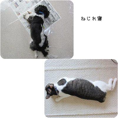 catsねじれ寝
