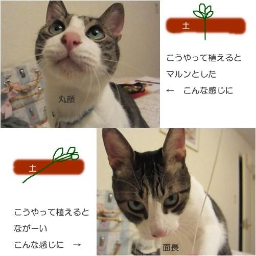 catsお芋