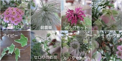 catsお花