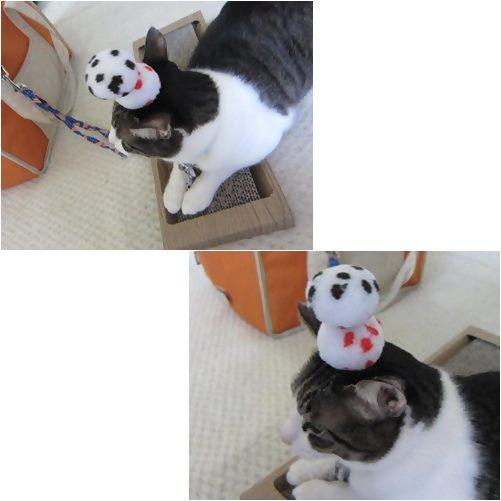 catsb