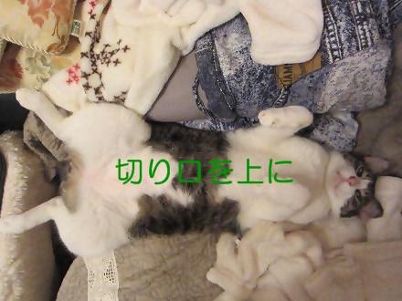 IMG_7655_20130619170248.jpg