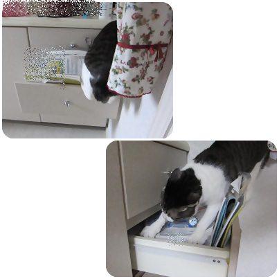 cat1_20130427193432.jpg