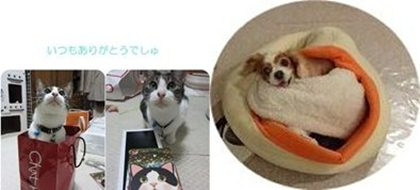 cat2-tile.jpg