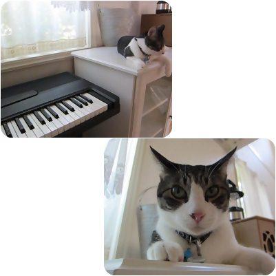 cat_20130204195819.jpg