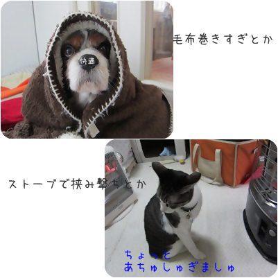 cat_2013020520005.jpg