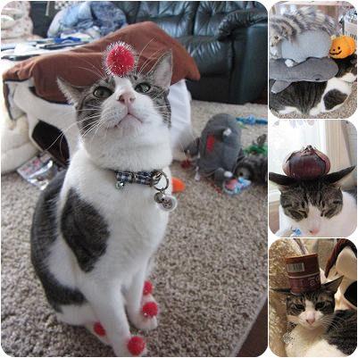 cat_20130208204424.jpg