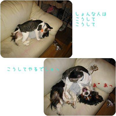 cat_20130212160925.jpg