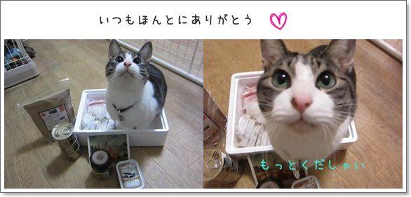 cat_20130213205830.jpg