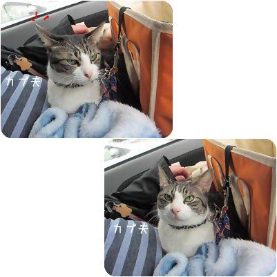 cat_20130215003112.jpg