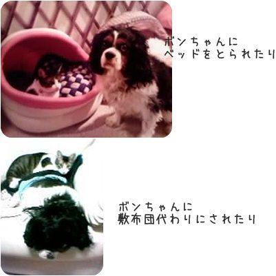 cat_20130215194939.jpg