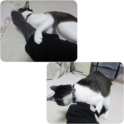 cat_20130306200931.jpg