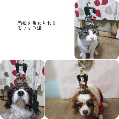 cat_20130320191607.jpg