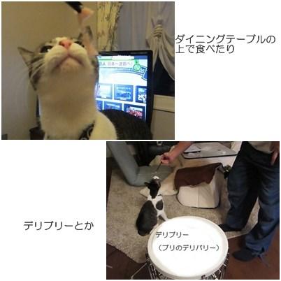 cat_20130325121117.jpg