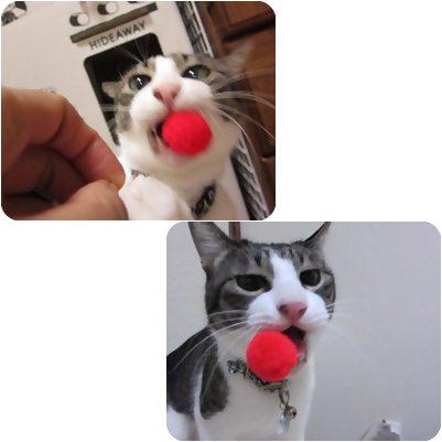 cat_20130406182234.jpg