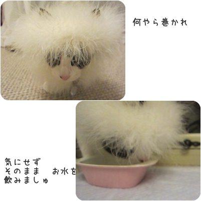 cat_20130409135714.jpg