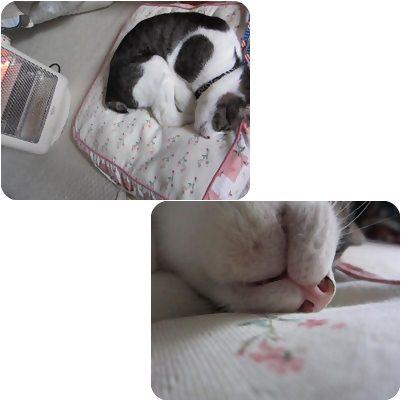 cat_20130412171332.jpg
