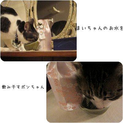 cat_20130414172619.jpg