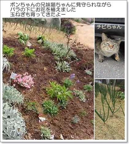 cat_20130417000704.jpg