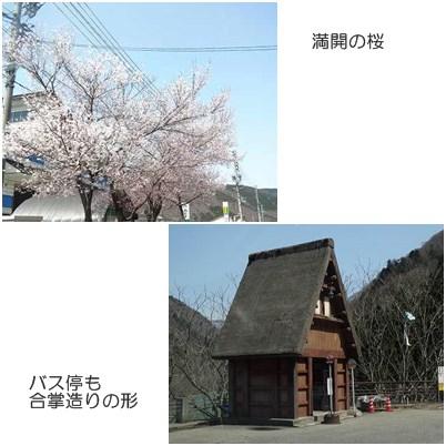 cat_20130417194148.jpg