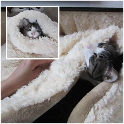 cat_20130419113005.jpg
