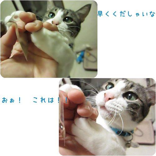 cat_20130424010104.jpg