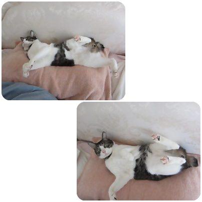 cat_20130426164501.jpg