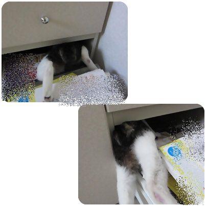 cat_20130427193512.jpg