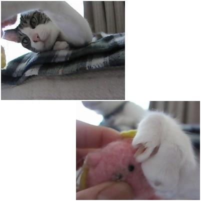 cat_20130430140321.jpg