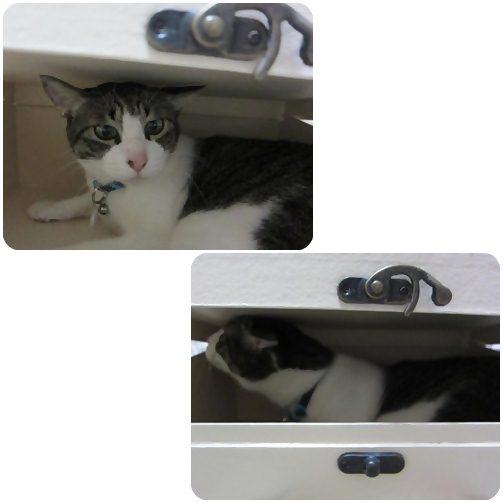 cat_20130602013519.jpg
