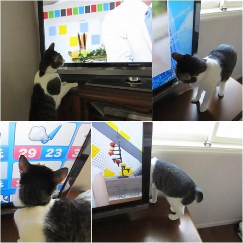 cat_20130615154218.jpg