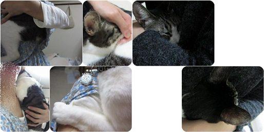 cats-horz.jpg