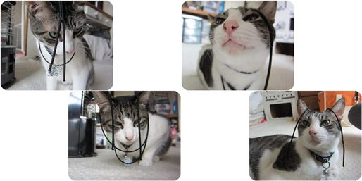 cats1-horz.jpg