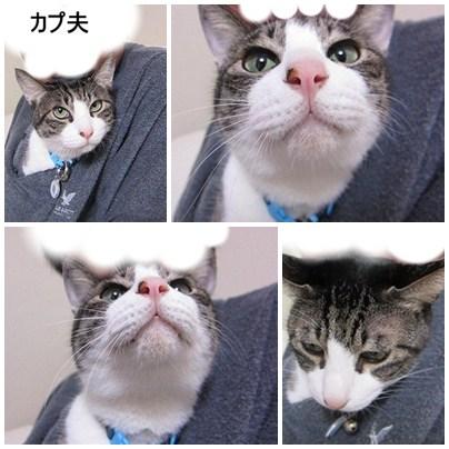 cats1_20120609172710.jpg
