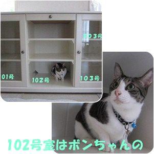 cats1_20120613171944.jpg