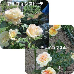 cats1_20120629010143.jpg