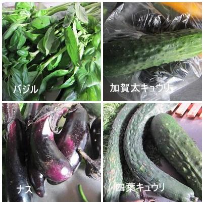 cats1_20120710173821.jpg