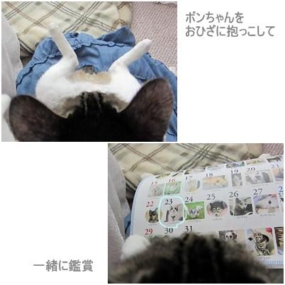 cats1_20120721152513.jpg