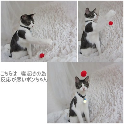 cats1_20120721175738.jpg