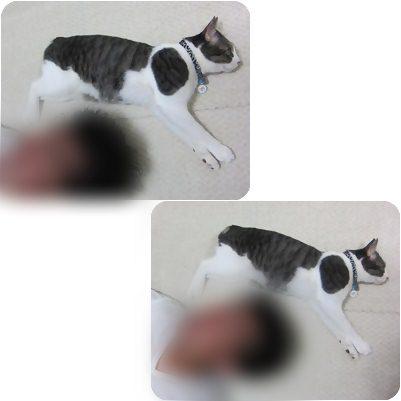 cats1_20120803162304.jpg