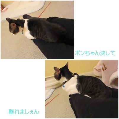cats1_20120810140246.jpg