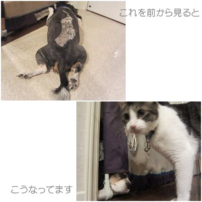 cats1_20120811174608.jpg