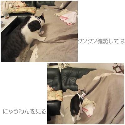 cats1_20120817152807.jpg
