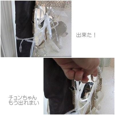 cats1_20120819001015.jpg