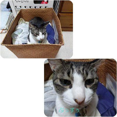 cats1_20120824161606.jpg