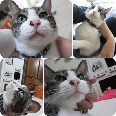 cats1_20120907171903.jpg