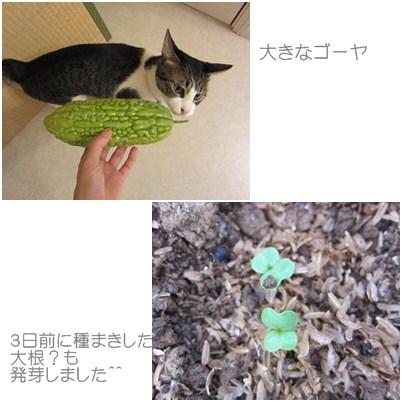 cats1_20120920002754.jpg