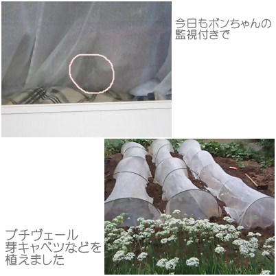 cats1_20120920234739.jpg