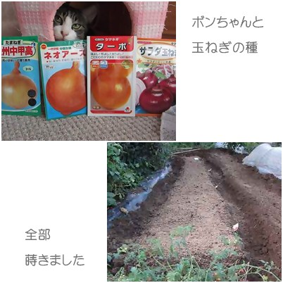 cats1_20120922000112.jpg