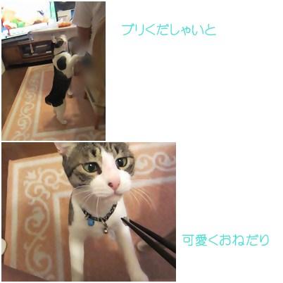 cats1_20120924010010.jpg